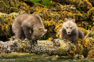 Great Bear Rainforest Family Tour