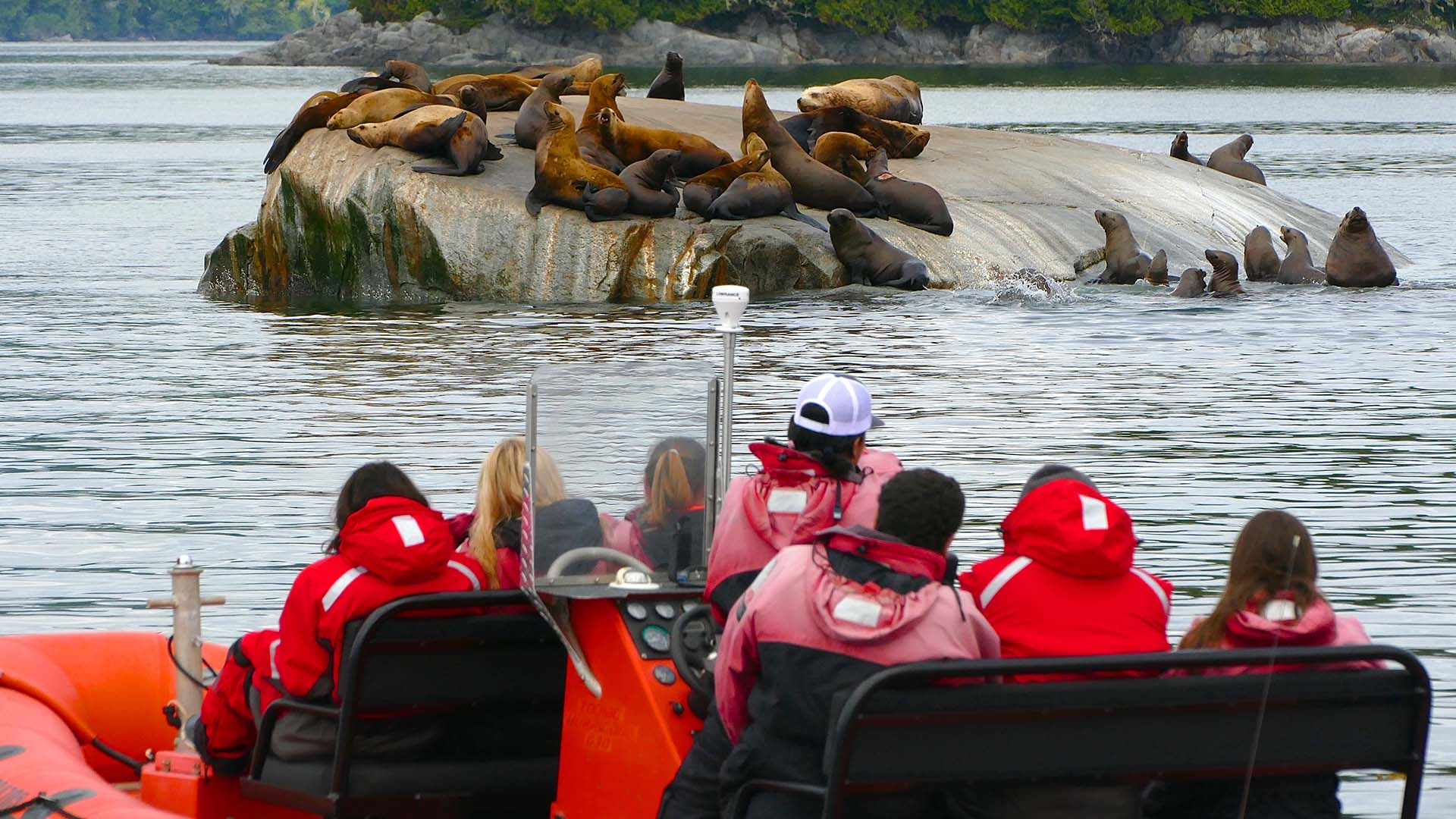 Great Bear Rainforest Family Tours - Sea Wolf Adventures