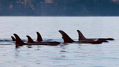 Whale Watching and Cultural Tours - Orcas